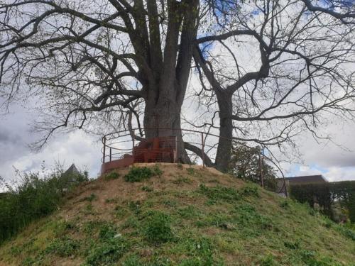 banc autour d'un arbre Chateau de Pizay 7