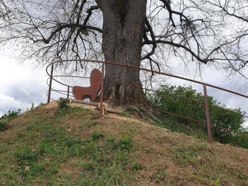 banc autour d'un arbre Chateau de Pizay 8